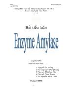 Enzym Amylase